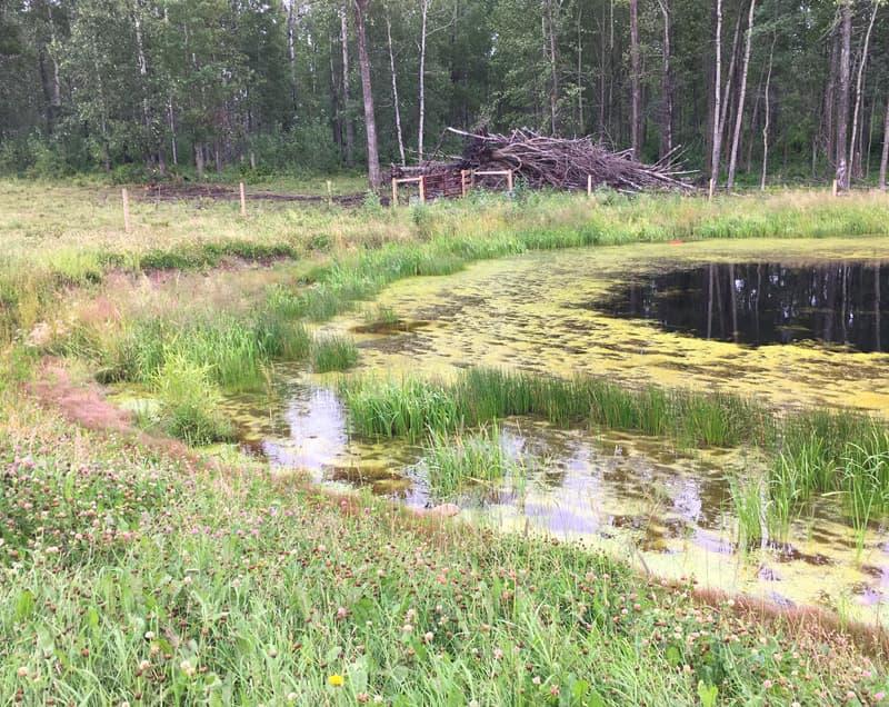 Wetland dugout